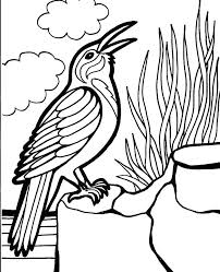 Bird Coloring Sheets Bird Coloring Pages For Preschoolers Sheets