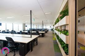 office natural light. green plants used as a natural room divider in this commercial office interior. rows of light n