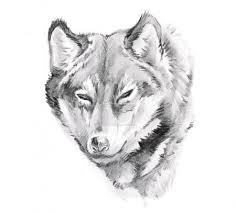 Fotka Skica O Tetování Wolf 8684178 Fotobanka Fotkyfoto
