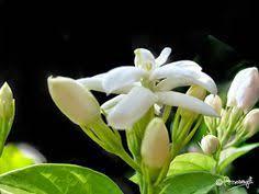 Assamese Flower Chart 8 Best Assamese Flowers Images In 2019 Flowers Plants Garden