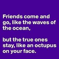 Quotes About Best Friendship Best 48 Funny Friendship Quotes Best Funny Friendship Pictures Quotes