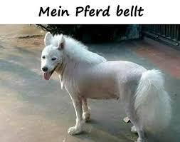 Pferd Lustige Sprüche Lustige Lustige Bilder Humor Xdpedia