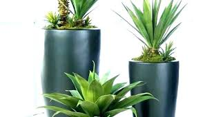 tall office plants. Beautiful Plants Cool  On Tall Office Plants T