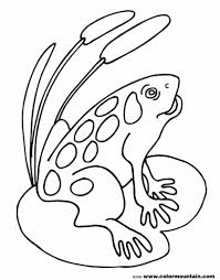 Small Picture Coloring Pages Animals Coqui Coloring Page Tree Frog Coloring