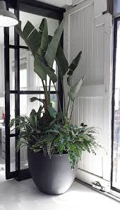 office indoor plants. Industrial Style Office Inspired By A Toolbox Indoor Plants