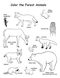 Small Picture Coloring Pages Of Forest Animals Coloring Pages