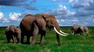 african animals wallpaper high resolution. Contemporary Resolution Intended African Animals Wallpaper High Resolution N