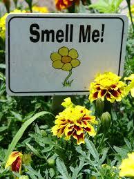 Small Picture Top 25 best School gardens ideas on Pinterest Kids garden