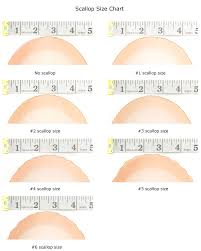 Scallop Sizes Chart Related Keywords Suggestions Scallop