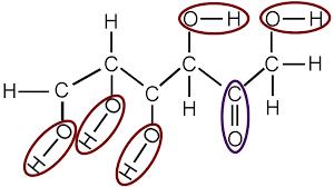Functional Groups Biology For Majors I