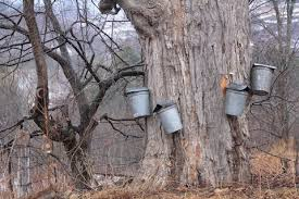 Maple Syrup Evaporator  Tanglewood Hill  Pinterest  Maple Syrup Backyard Maple Syrup