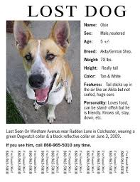 Lost Pet Flyer Maker Impressive Missing Pet Flyer Template Nice Lost Pet Flyer Templates Design Blog