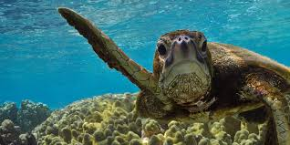 How Long Do Sea Turtles Live And Other Sea Turtles Facts Wwf
