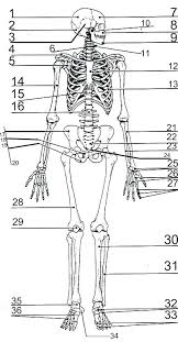 Unique Human Body Coloring Pages For Kindergarten Images Example