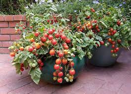 the secret to container vegetable gardening