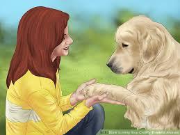 ways to help stop cruelty towards animals wikihow image titled help stop cruelty towards animals step 14