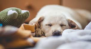How To Calm Down A Dog Top Tips For Calm Dogs