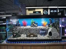 decor fish tanks freshwater fish tank ideas aquarium fish mesmerizing fish tank decoration ideas plus aquarium