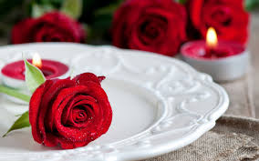 red rose on a plate flower hd wallpaper