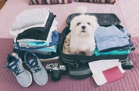 is it safe to sedate your dog for travel