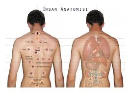 Cupping Points Chart Pdf Cupping Body Map Hijama Points For