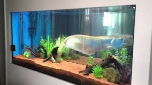 fish tank lighting ideas. Winsome Appealing Glass Big Fish Tanks For Sale And Beautiful Aquarium Saltwater Tank Lighting Ideas