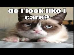 The Grumpy Cat Meme | Funniest The Grumpy Cat Meme Compilation ... via Relatably.com