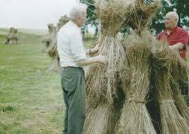 Rich tapestry of the past woven from memories of flax fields | Belfast News  Letter