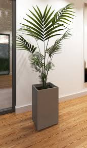 Lovable Ds Max Palm Plant Max Palm Plant in Indoor Palm Plants