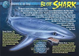 lemon shark - Google Search   science   Pinterest   Shark, Animal ...