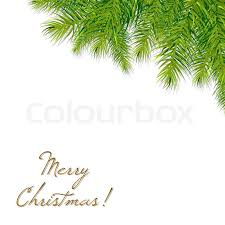 tree branch with leaves vector. christmas tree branch, vector illustration, branch with leaves