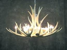 astounding antler chandelier for chandeliers on griffith in american natural resources 8 light real mule deer oval