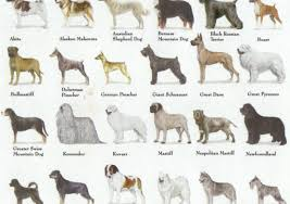 All Dog Breeds Chart Why Breed Isnt The Only Thing That Matters How I Met My Dog
