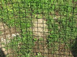 welded wire dog fence. Image 1 Welded Wire Dog Fence C