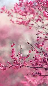 nf15-pink-blossom-nature-flower-spring-love