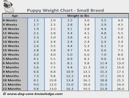 Puppy Weight Chart This Is How Big Your Dog Will Be
