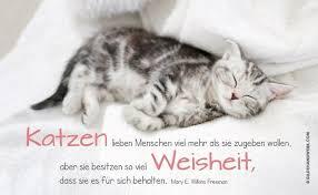 Katzen Bilder Mit Spruchen Diagramstockphotoscf