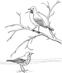 Small Picture American Robin and Wood Thrush coloring page Free Printable