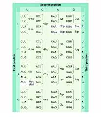 Use The Genetic Code Chart To Decode The Amino Acid Sequence