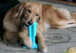 my review of the brite bite dental stick aka bristly brushing stick the dog toothbrush toy that replaces manually brushing your dog s teeth the dog