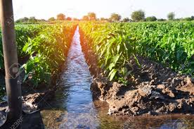 Watering Of Agricultural Crops Countryside Irrigation Natural
