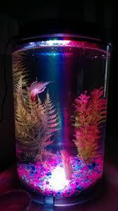 Small Fish Bowl Decorations Fluval Chi Fish Tank Betta Fish Tank Pinterest Fish Tanks Betta 53