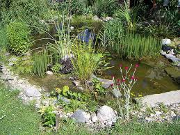 keeping tropical fish in outdoor ponds dangers and preparing for the end of the summer season