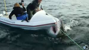 great white shark attacks boat. Perfect Shark AntiCageDiving Groups Use Video Of Great White Shark Attack To Highlight  Problem  ABC News Throughout Attacks Boat E
