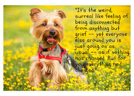 Dog Passing Quotes Extraordinary 48 Quotes To Help You Mourn The Loss Of Your Dog Grieving For Dogs