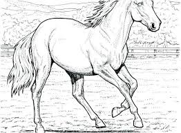Horse Coloring Pages For Adults Detailed To Print Free Printable