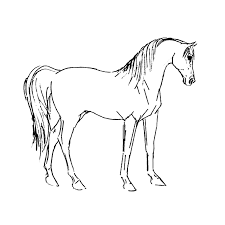 Luxe Paarden Kleurplaat Printen Krijg Duizenden Kleurenfotos Van