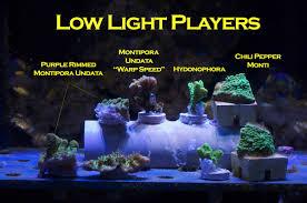 light players