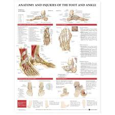 Ankle Bone Chart Anatomy And Injuries Of The Foot And Ankle Chart Poster Paper