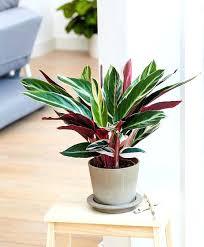 best indoor plants low light house plants low light best low light plants ideas on indoor